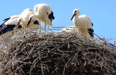 Un déclin animal s'observe en France, particulièrement chez les oiseaux nicheurs.