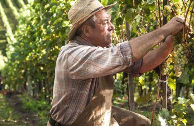 Petites retraites agricoles : une revalorisation enfin effective