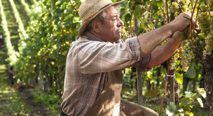 Une revalorisation des petites retraites agricoles sera bientôt effective.