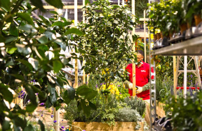 Co-jardinage urbain : une activité florissante à Toulouse
