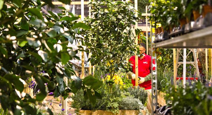 Le co-jardinage urbain est une activité florissante à Toulouse.