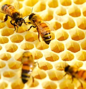 intérieur d'une ruche d'abeilles protégée grâce à une aide numérique des apiculteurs