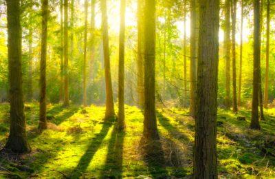 Pour lutter contre le réchauffement climatique, Besançon renforce la densité de ses forêts.
