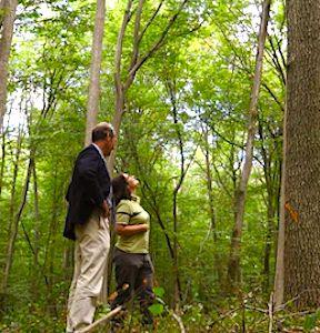 La forêt de Chantilly est un exemple représentatif des dégâts du réchauffement climatique.