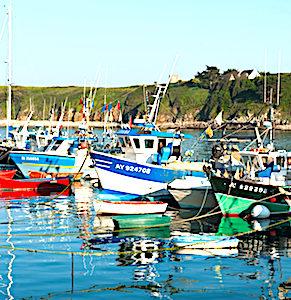 Dans les îles du Ponant, une association veille à sauvegarder l'environnement breton.