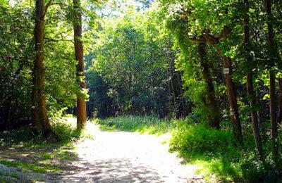 La forêt de Chantilly est un exemple révélateur des dégâts du réchauffement climatique.
