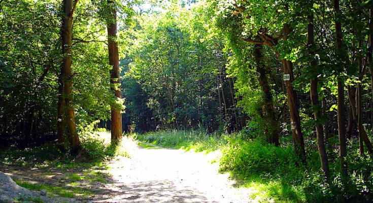 Les dégâts de la forêt de Chantilly, un exemple du réchauffement climatique