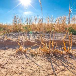 vue de la sécheresse dans 13 communes des Hauts-de-Seine en 2020.