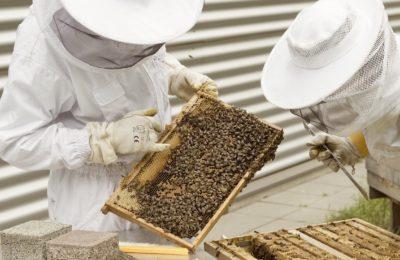L'aide numérique aux apiculteurs permet d'empêcher les vols de ruches
