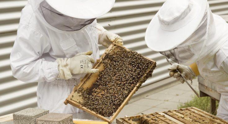 Aide numérique des apiculteurs : des applications GPS qui alertent