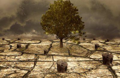 L'Etat a reconnu la sécheresse qui a touché 13 communes des Hauts-de-Seine en 2020.