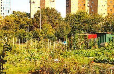 Menace sur les jardins ouvriers d'Aubervilliers : un projet très contesté