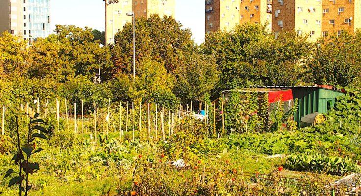 Une menace plane aujourd'hui sur les jardins ouvriers d'Aubervilliers.