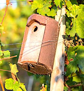 Installer des nichoirs pour les oiseaux permet à l'Alsace de préserver sa biodiversité, actuellement menacée.