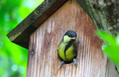 Installation de nichoirs pour les oiseaux en Alsace pour préserver la biodiversité