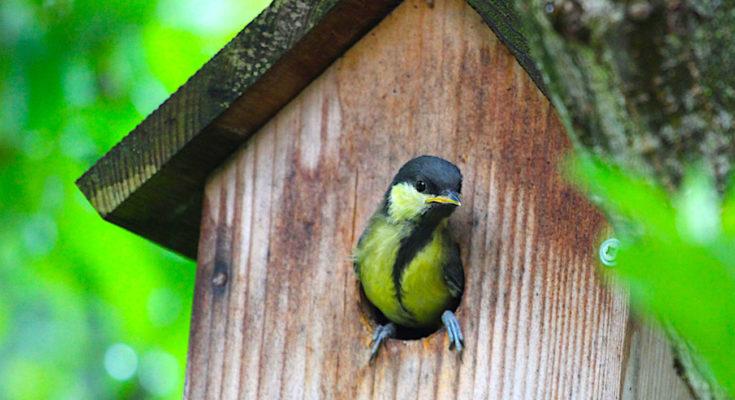 Installer des nichoirs pour les oiseaux permet à l'Alsace de préserver sa biodiversité.