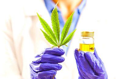 Marché CBD cannabis médical : une tendance française qui se confirme