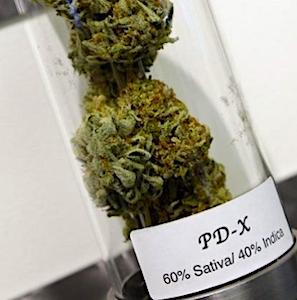 Pendant deux ans, l'usage du cannabis médical va être suivi et expérimenté en France.