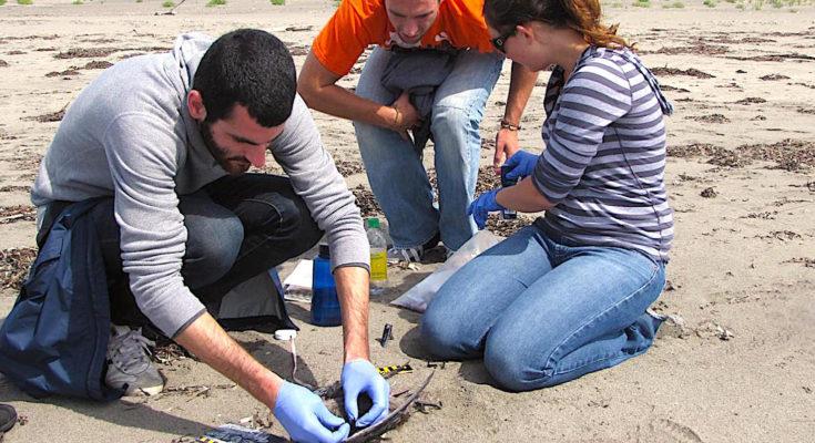 Le nettoyage des plages françaises souillées, notamment durant la période estivale, revient cher aux communautés riveraines.